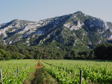 Domaine Hauvette: Natural Wines in the Baux de Provence